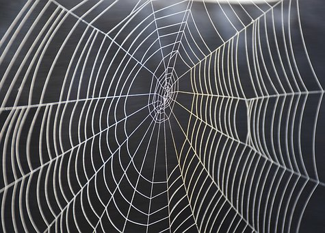 המחיר להדברת עכבישים
