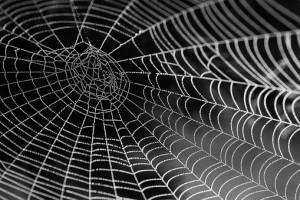 הדברת עכבישים בירושלים